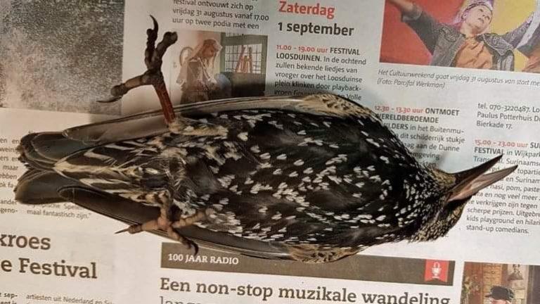 Sute de păsări au murit, se pare, în timpul unui experiment 5G