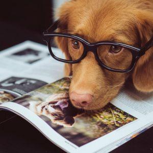 dragostea pentru citit