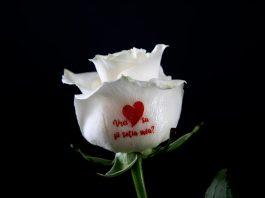 Mesajele personalizate imprimate direct pe flori